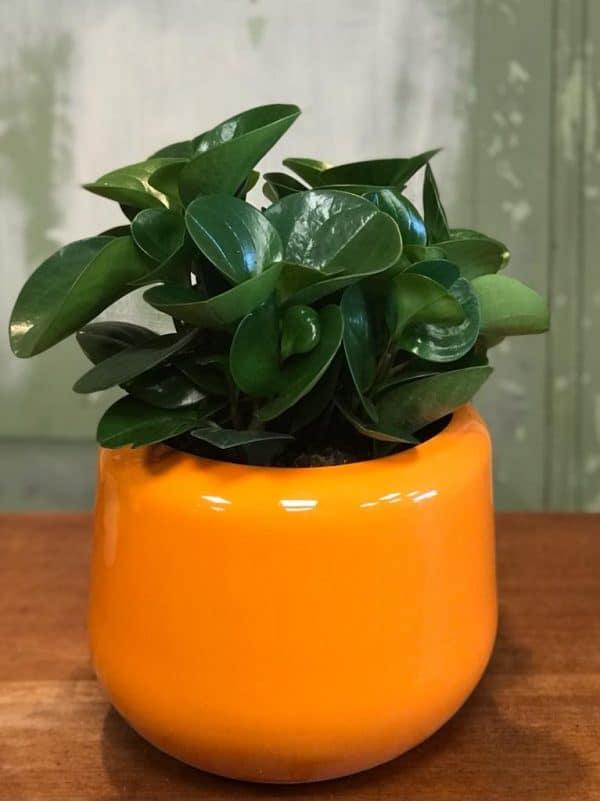 kleurige bloempot